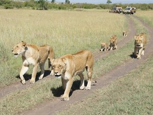 5 Days Spectacular Kenya Safari