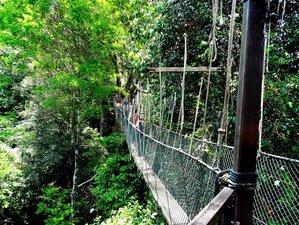 2 Day Rainforest Wildlife Tour in Taman Negara, Malaysia