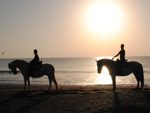 5 Days Budget Life Changing Yoga & Horse Holiday at Costa del Sol