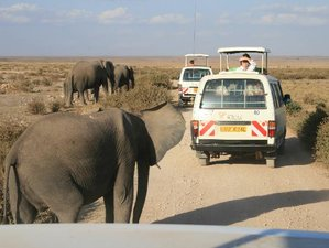 4 Days Kenya Safari from Tsavo West to Tsavo East