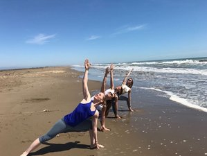23 Day Professional Zen Shiatsu and Yoga Teacher Training in Valencia