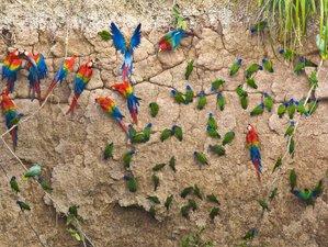 5 Day Wild Amazon Wildlife Expedition in Madre de Dios, Peru
