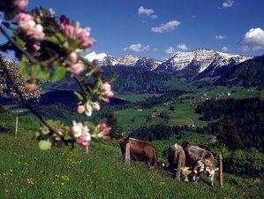 6 Day Enlighten Life Meditation Retreat in Oberstaufen, Allgäu