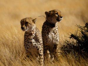 4 Days Etosha and Swakopmund Safari in Namibia