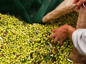 11 Day Olive Tree Program: Nature, Gastronomy, and Sustainability Tour in the Mythical Peloponnese