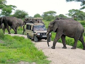 2 Days Backpackers Short Safari in Tanzania