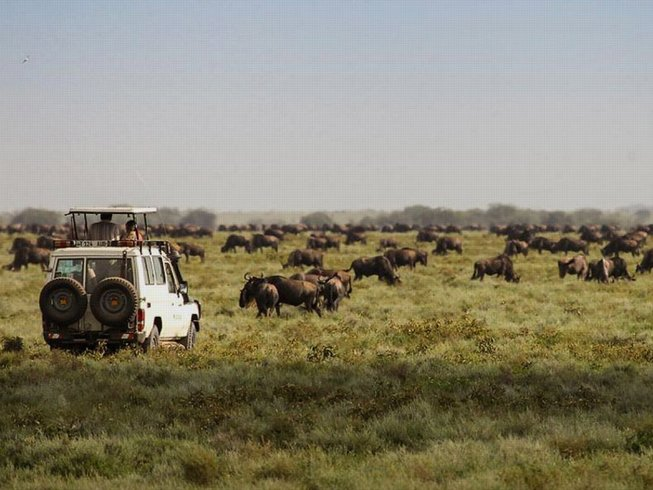 6 Days Calving Migration Safari in Tanzania