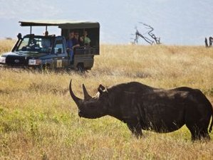 10 Days Kenya Honeymoon Safari in Top Luxury Lodges and Camps