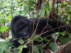 14 Days Journey to the Jungle Safari in Uganda