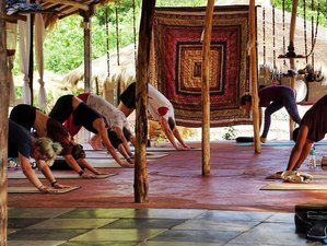 41 Days Explore India with Completing a Yoga Teacher Training in Rajasthan, India