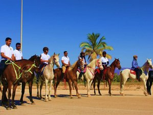 8 Day Basic Horse Riding Holiday in Salalah, Dhofar