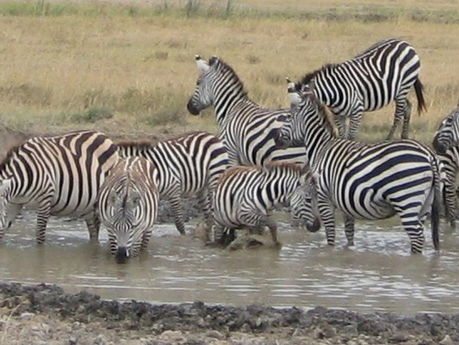 10 Days Singles Safari Holidays in Kenya