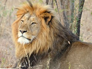 4 Days Big Five Safari in Kruger National Park
