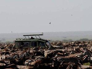 8 Days Serengeti Calving Season Safari