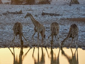 11 Days Extended Classic Self-Drive Safari in Namibia