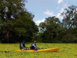 5 Day Adventurous Kayak Trip, Dolphin Watching, and Wildlife Tour in Amazonas, Colombia