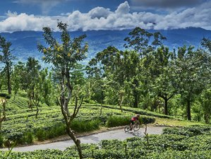12 Days Guided Spice Trails Cycling Holiday from Negombo to Colombo in Sri Lanka