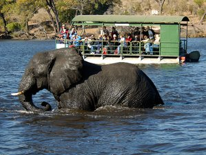 13 Days Fantastic Guided Safari in Botswana and Zambia