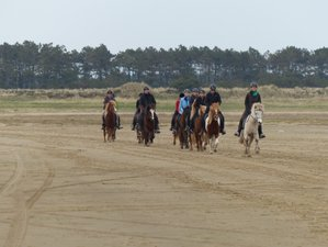 4 Days Mandøweekend Horse Riding Holiday in Denmark