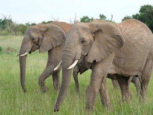8 Days-Amboseli-Lake Naivasha-Lake Bogoria-Lake Nakuru-Masai Mara