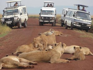 4 Days Masai Mara, Lake Naivasha and Hell'sgate National park Wonderful Safari in Kenya