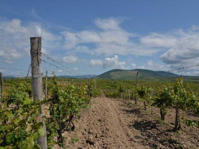 5 Days Bike Culinary Holidays and Wine Tour Hungary