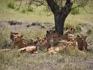 6 Days Big Five Safari in Tanzania