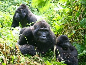 7 Days Gorillas Trekking and Savanna Safari in Uganda