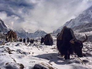 12 Day Langtang Valley Trekking Safari in Nepal