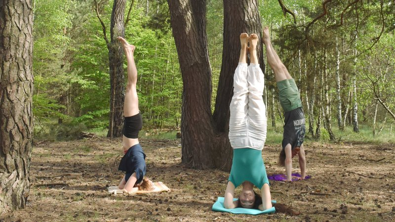 Forest Stoel Wit : 9 days forest yoga retreat in białowieża national park poland