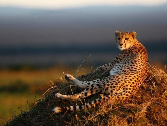 3 Days Wildlife Safari in Kenya