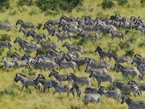 15 Days Experience Camping Tour and Zebra Migration Safari in Botswana and South Africa