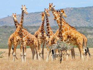 4 días de lujoso safari en la reserva de caza de Sabi Sand y el Parque Nacional Kruger, Sudáfrica
