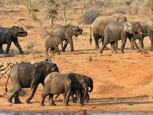 3 Days Tremisana Classic Safari in Kruger National Park, South Africa
