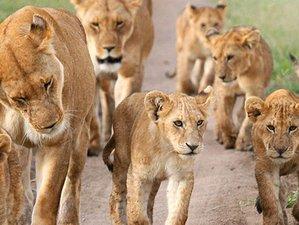 7 Days Masai Mara, Lake Naivasha, Lake Nakuru, and Amboseli Safari in Kenya