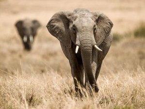 17 Days Classic Safari in Kenya