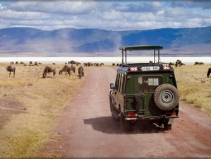 7 Days Tanzania  Budget  Luxury Safari to Lake Manyara, Serengeti, Ngorongoro & Tarangire