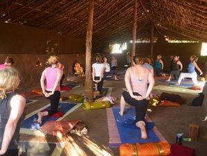 9 Days Cacao Ceremony, Pranayama and Yoga Retreat in Goa, India