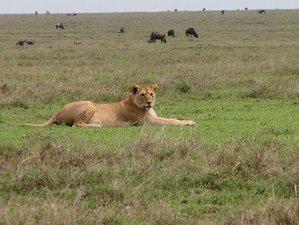 3 Days Camping Safari in Tanzania