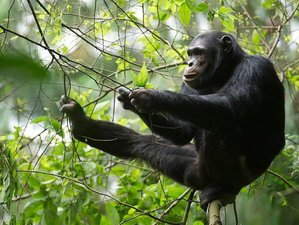 7 Days Unforgettable Wildlife Viewing Safari in Uganda
