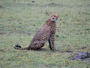 11 Days Adventure Tour Safari in Kenya and Tanzania