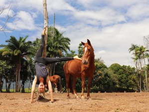 10 Day All-Inclusive Natural Horsemanship and Yoga Holiday in Tucurrique, Cartago
