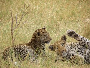 6 días de emocionante safari en Botsuana
