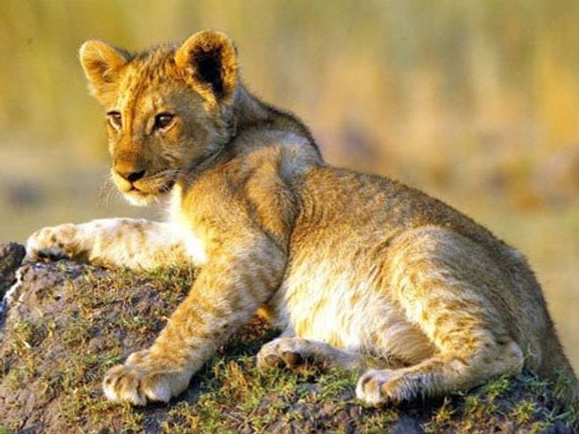 5 Days Guided Classic Safari in Kenya