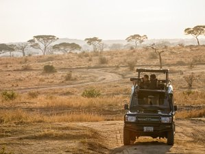 11 Days Photography Safari in Serengeti, Tarangire, and Ngorongoro Crater