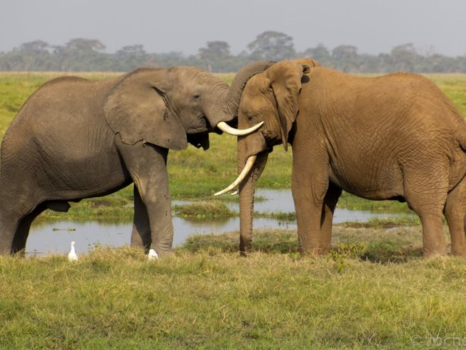 3 Days Big Five Safari in Tsavo East and Amboseli