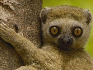 13 Days Lemur Safari in Madagascar
