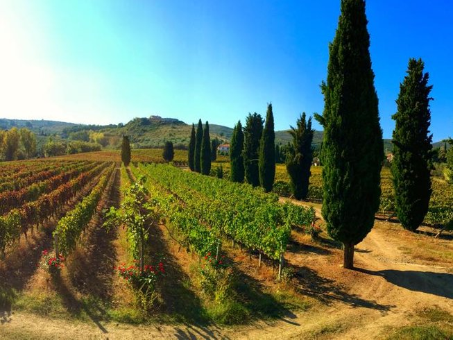 7 Days Wine Tasting and Cooking Vacations in Salerno, Italy