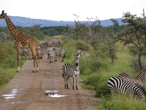 5 Days Breathtaking Tanzania Safari