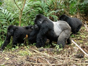 5 Days Golden Monkey and Gorilla Safari in Kisoro, Uganda